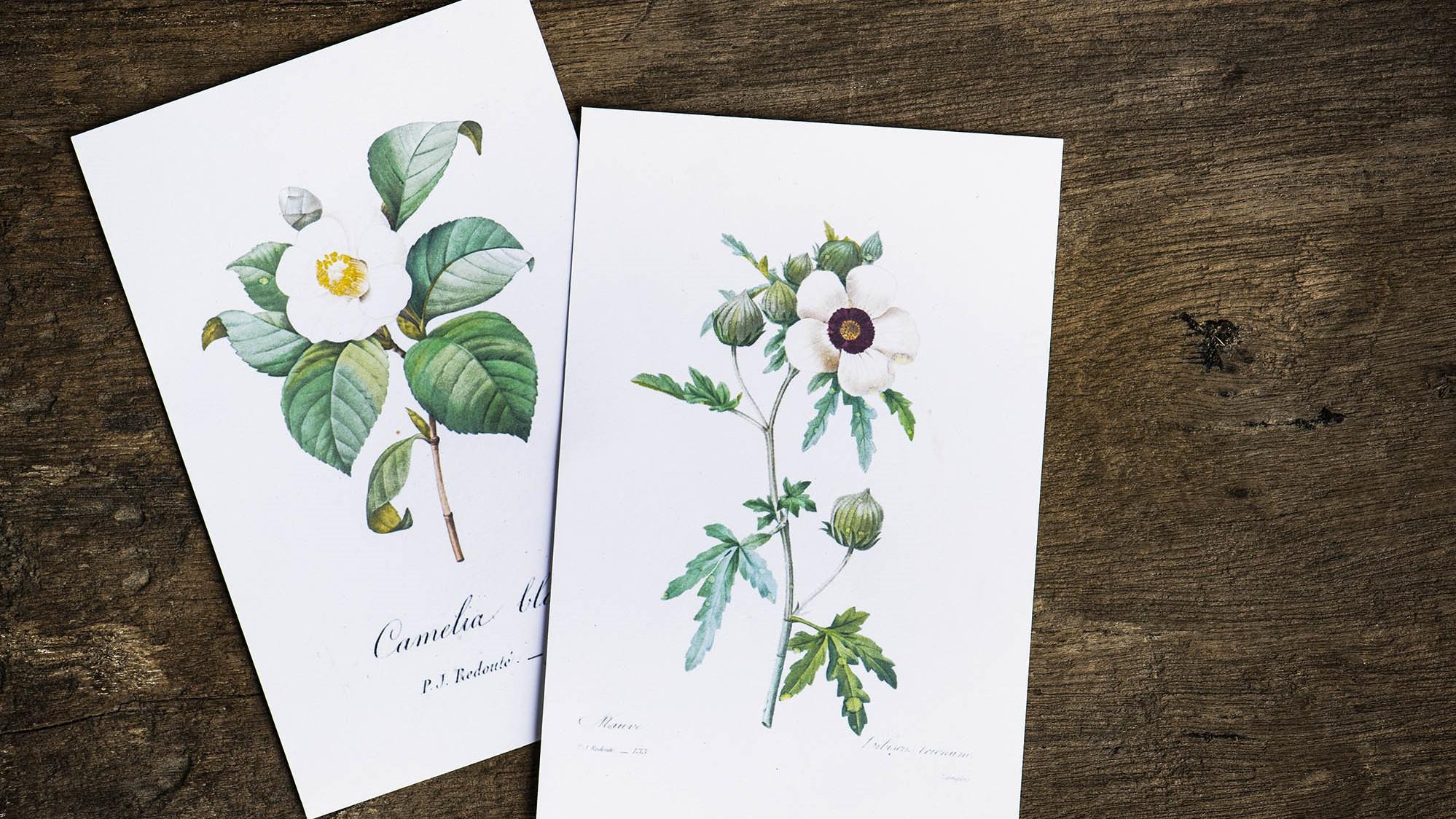 Floral designed greeting cards