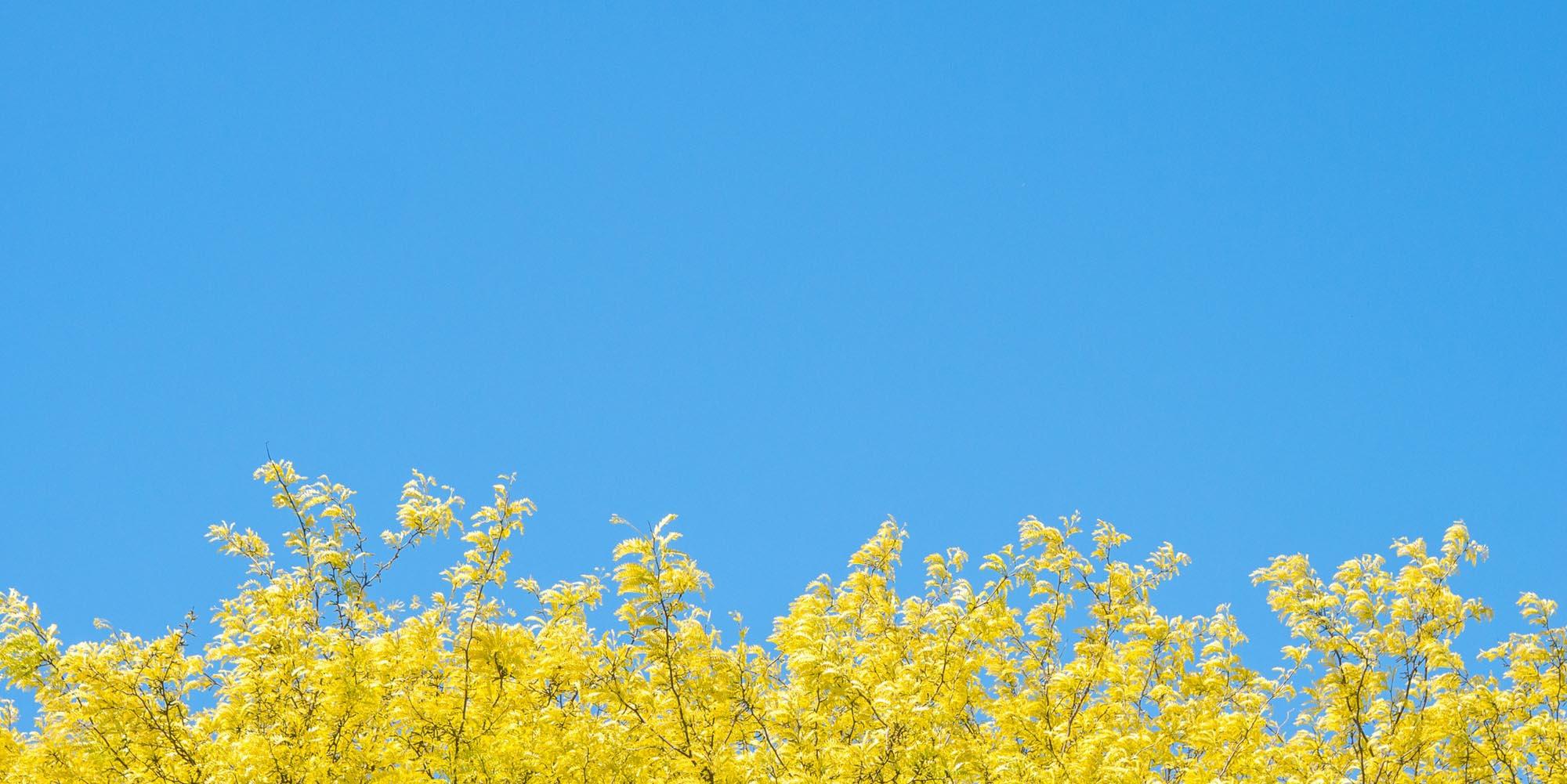 Conseils pour r aliser une photo minimaliste parenth se for Photographie minimaliste